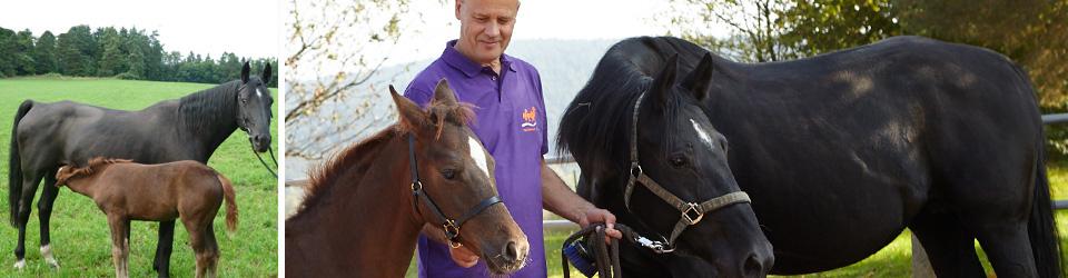 tierarztpraxis-pferde-linder-fohlenerstversorgung