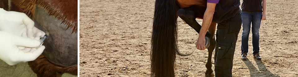 tierarztpraxis-pferde-linder-orthopaedie