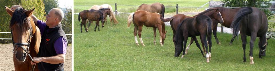 pferdepraxis-linder-25